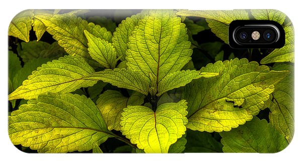 Vintage Green Coleus Plant IPhone Case