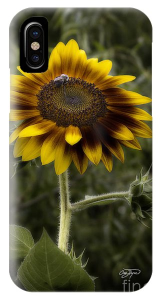 Vintage Rustic Sunflower IPhone Case