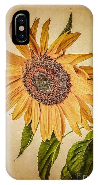 Sunflower Seeds iPhone Case - Vintage Sunflower by Edward Fielding