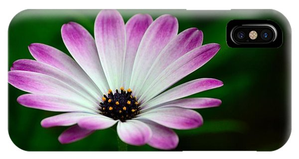 Violet And White Flower Petals With Yellow Stamens Blossoms  IPhone Case