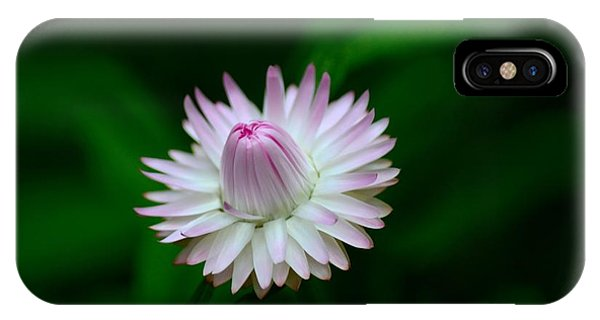 Violet And White Flower Sepals And Bud IPhone Case