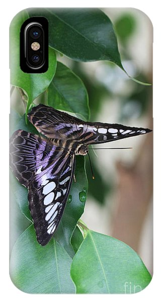 Violet Clipper Butterfly IPhone Case