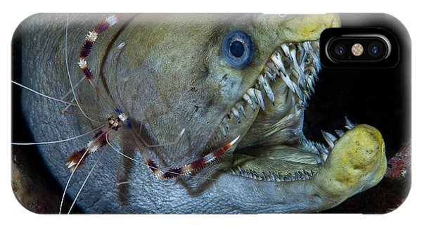 Viper iPhone Case - Viper Moray And Boxer Shrimp by C?dric P?neau
