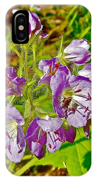 Virginia Waterleaf Near Jackson Falls Along Natchez Trace Parkway-tennessee  IPhone Case