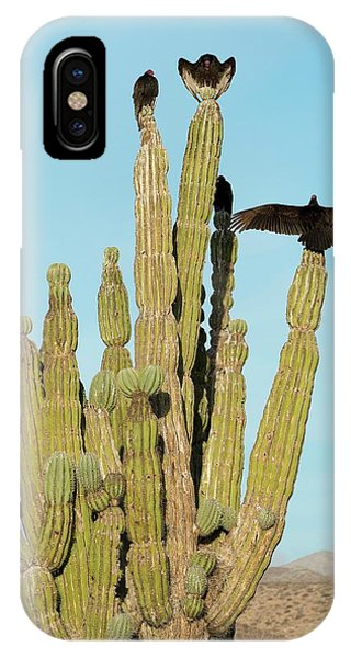 Adapted iPhone Case - Vultures On A Cactus by Christopher Swann