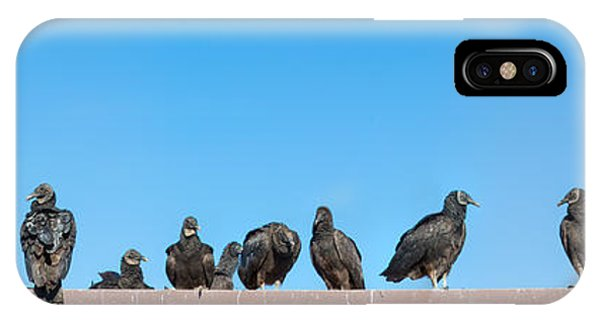 Anhinga iPhone Case - Vultures On Anhinga Trail, Everglades by Panoramic Images