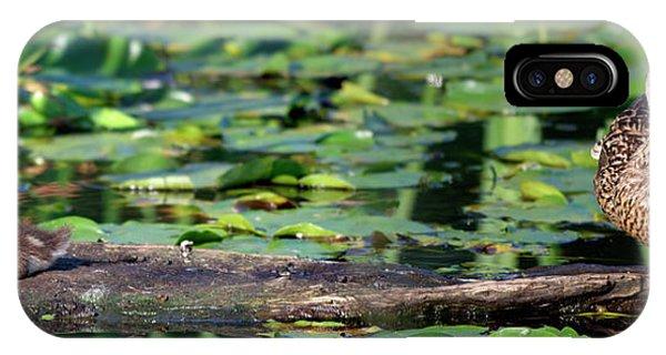 Wa, Juanita Bay Wetland, Mallard Female Phone Case by Jamie and Judy Wild