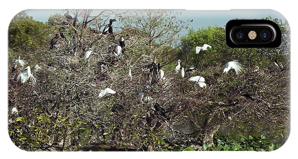 Anhinga iPhone Case - Wading Birds Roosting In A Tree by Bob Gibbons