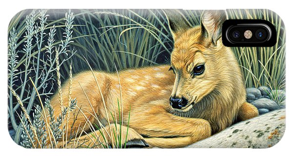 Waiting For Mom-mule Deer Fawn IPhone Case