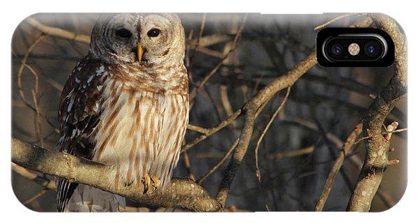 Bird iPhone Case - Waiting For Supper by Lori Deiter