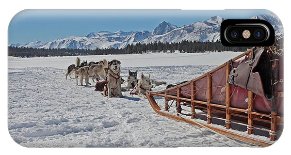 Waiting Sled Dogs  IPhone Case