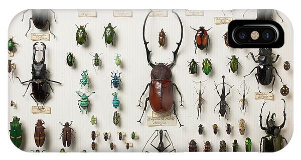 Coleoptera iPhone Case - Wallace Collection Beetle Specimens by Natural History Museum, London/science Photo Library