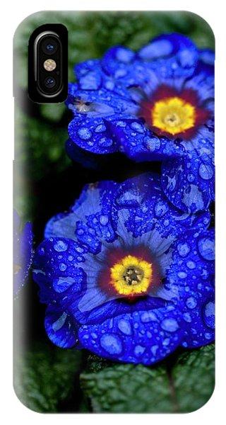 Cultivar iPhone Case - Wanda Primroses (primula 'wanda') by Ian Gowland