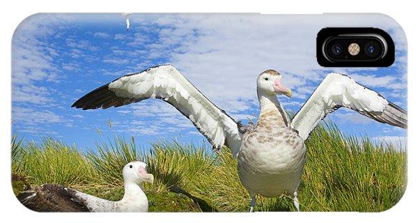 Albatross iPhone Case - Wandering Albatross Courting  by Yva Momatiuk John Eastcott