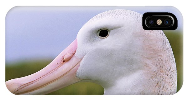 Albatross iPhone Case - Wandering Albatross (diomendea Exulans by Martin Zwick