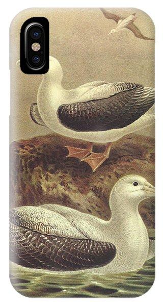 Albatross iPhone Case - Wandering Albatross by Dreyer Wildlife Print Collections