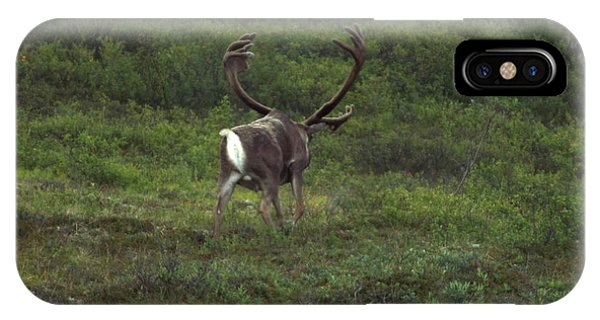IPhone Case featuring the photograph Wandering Caribou by Barbara Von Pagel