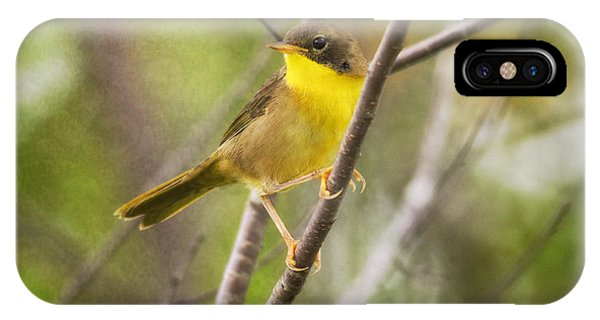 Warbler iPhone Case - Warbler In Sunlight by Susan Capuano