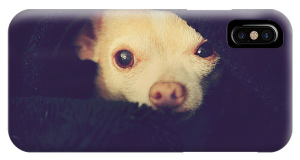 Chihuahua iPhone Case - Warm And Cozy by Laurie Search