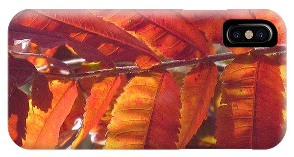 Warm Autumn Sun Phone Case by Loretta Pokorny