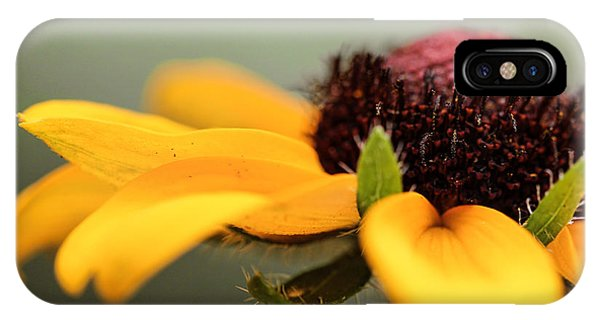 Warm Rudbeckia IPhone Case