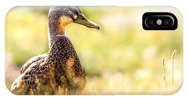 Uplift iPhone Case - Warm Summer Morning And A Duck by Bob Orsillo