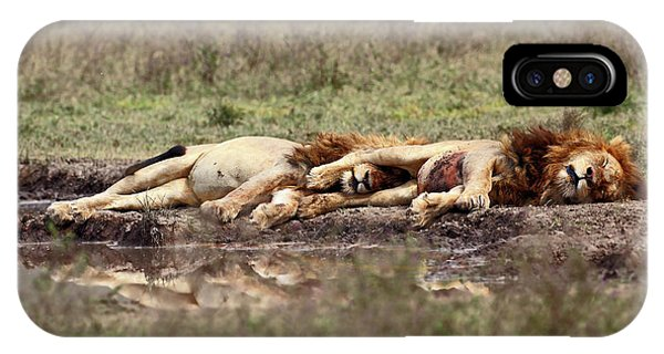 Lion iPhone Case - Warriors At Rest by Arik Kaneh