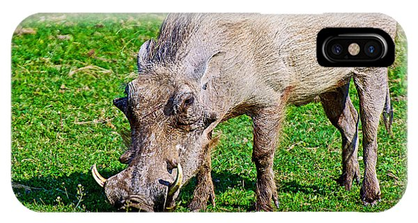 Warthog In Addo Elephant Park Near Port Elizabeth-south Africa  IPhone Case