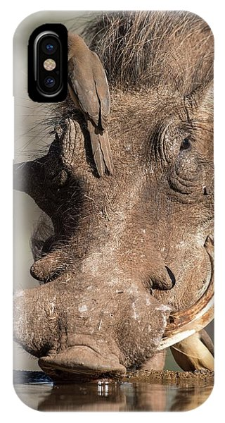 Behaviour iPhone Case - Warthog With Ox-pecker At A Watering Hole by Tony Camacho