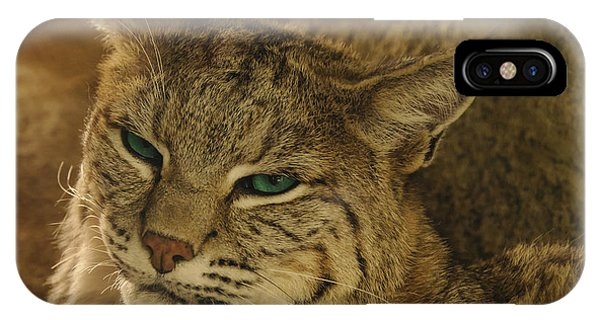 Wary Bobcat IPhone Case