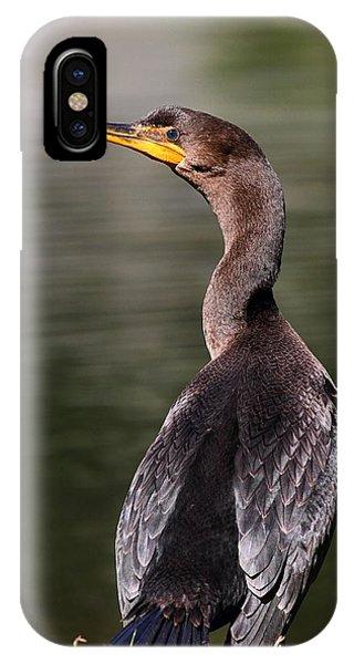 Wary Cormorant IPhone Case