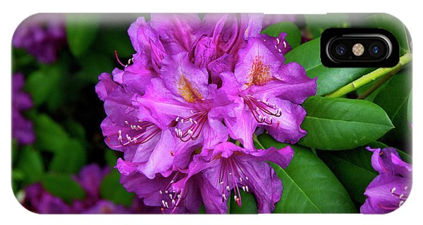 Washington Coastal Rhododendron IPhone Case