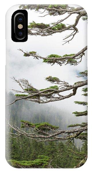 Washington, Mount Rainier National Park Phone Case by Jaynes Gallery