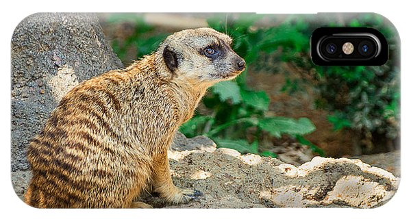 Meerkat iPhone Case - Watchful Meerkat by Jon Woodhams