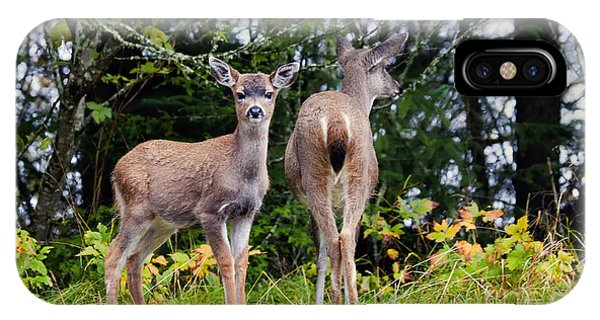 Mule Deer iPhone Case - Watching Out For Mom by Mike  Dawson