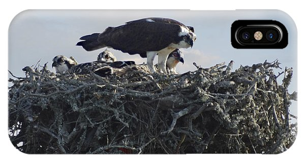 Ospreys iPhone Case - Watching The Kids - Ospreys by Mike McGlothlen