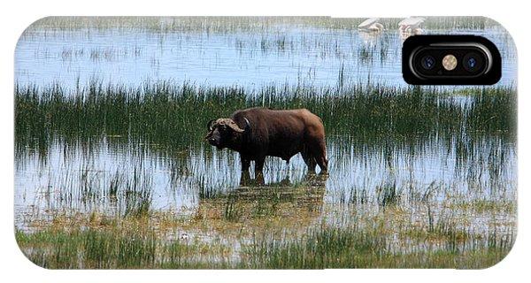 Water Buffalo At Lake Nakuru IPhone Case