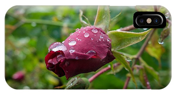Rain Drops On Rose IPhone Case