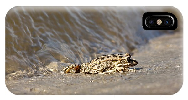 Water Frog Close Up  IPhone Case