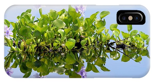 Water Hyacinth 1 Phone Case by Sheri McLeroy
