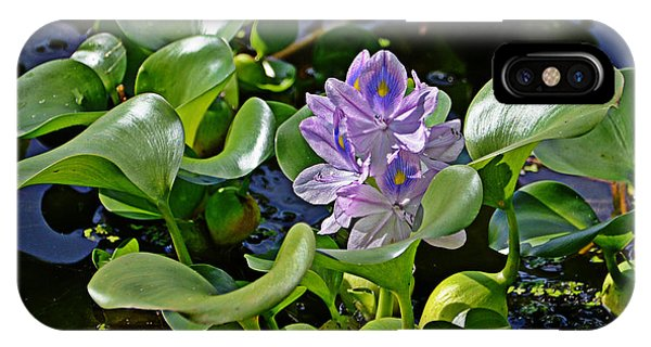 Water Hyacinth IPhone Case