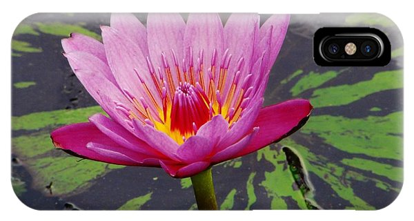 Water Lily Phone Case by Cynthia Merino