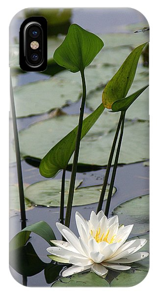 Water Lily In Bloom IPhone Case