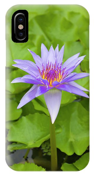 Micronesia iPhone Case - Water Lily, Palau by Keren Su