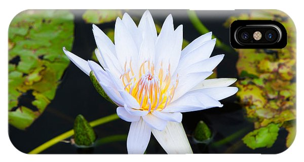 Water Lily With Lily Pads In A Pond IPhone Case