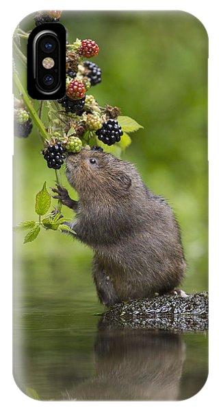 Water Vole Eating Blackberries Kent Uk IPhone Case