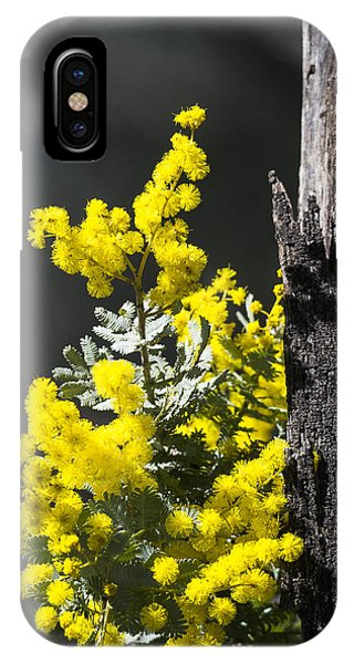 Wattle - Australia IPhone Case