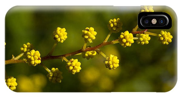 Wattle Buds - Australia IPhone Case