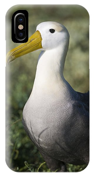 Waved Albatross Phone Case by Richard Berry