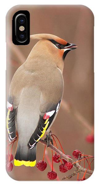 Waxwing In Winter IPhone Case